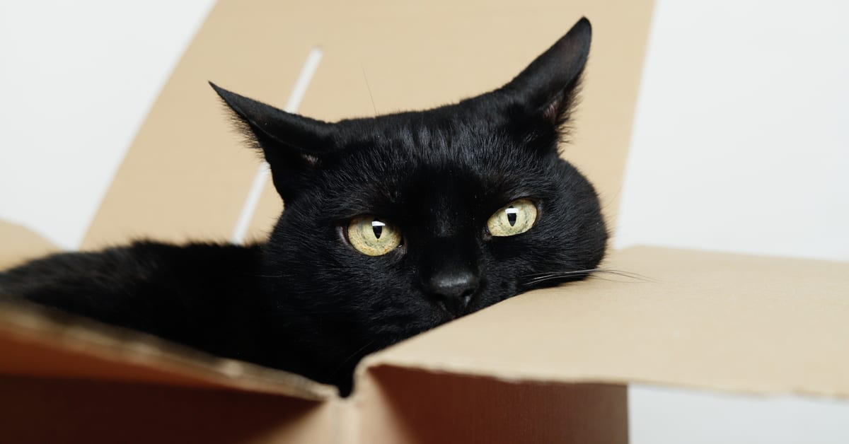 Meow! A Pet Owner's Guide to Moving With a Cat